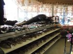 Alligator heads in a shop just outside Palatka.