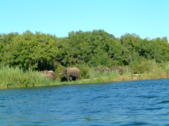 Elephants on the shoreline of lake Kariba in Zimbabwe.